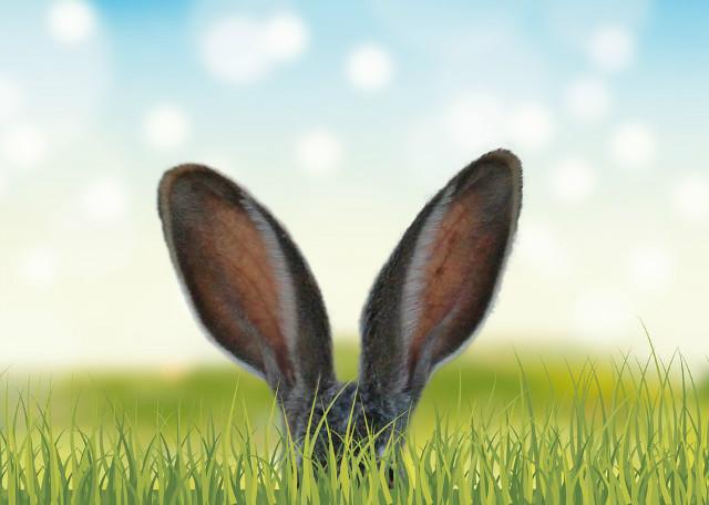 봄-토끼귀.jpg